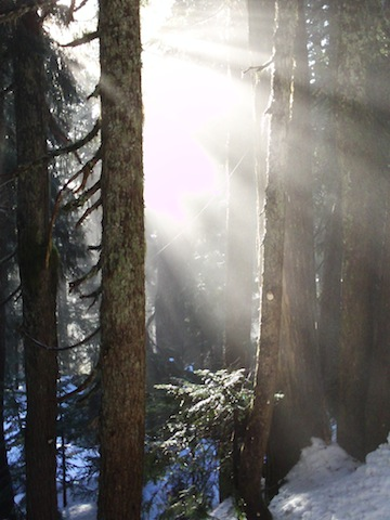 Light_through_trees_Pamela