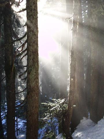 Light_through_trees_Pamela