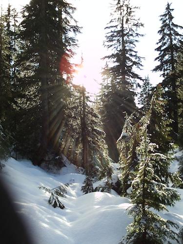 Light_trees_Pamela_2